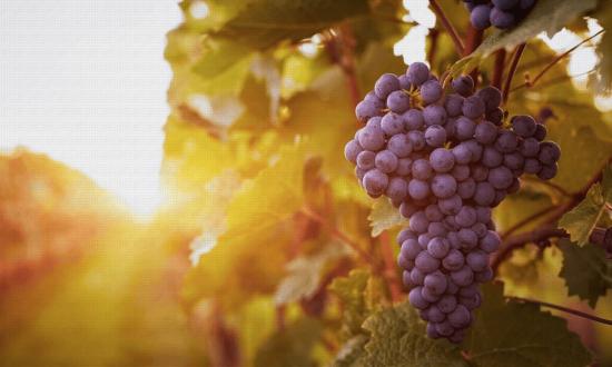 Ruta del Queso y el Vino